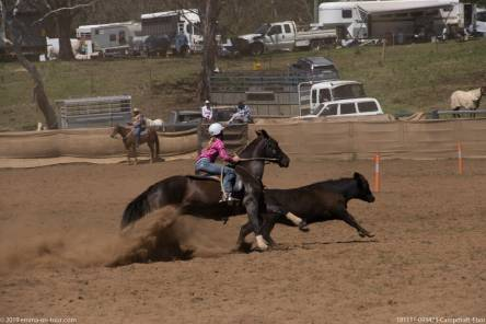 181111 093423 Campdraft Ebor