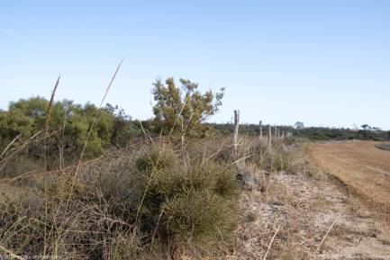 190302 082825 Rabit Proof Fence